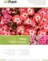 Phlox Famous Series flyer