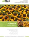 Rudbeckia Summerina Series